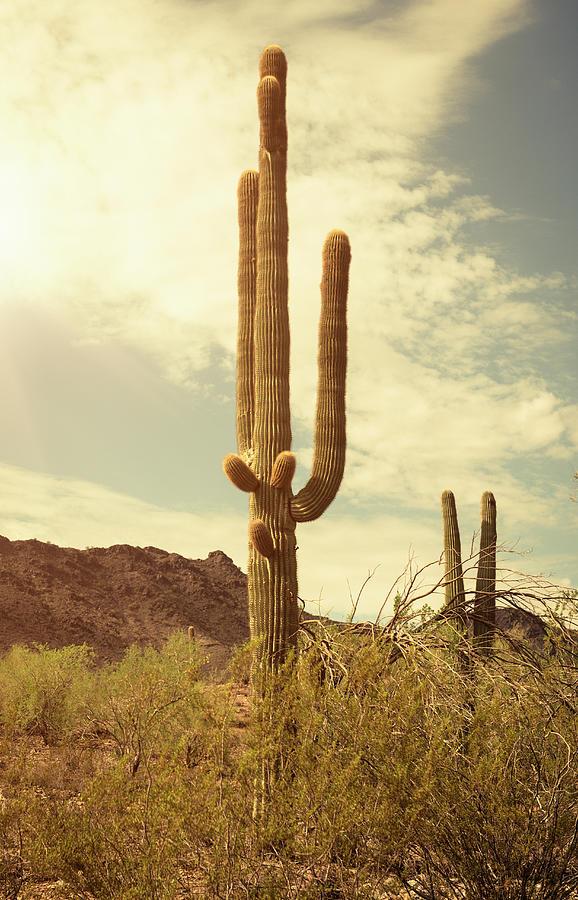 Arizona Saguaro National Park Cactus Photograph by Franckreporter