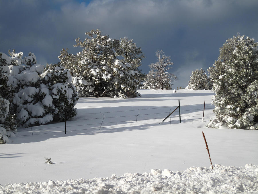 Arizona Snow 3 Photograph by Gregory Daley  MPSA