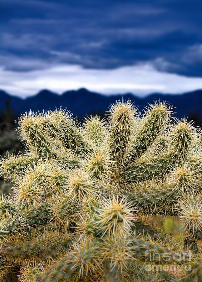 Arizona Photograph - Arizona Teddy Bear Cactus by Henry Kowalski