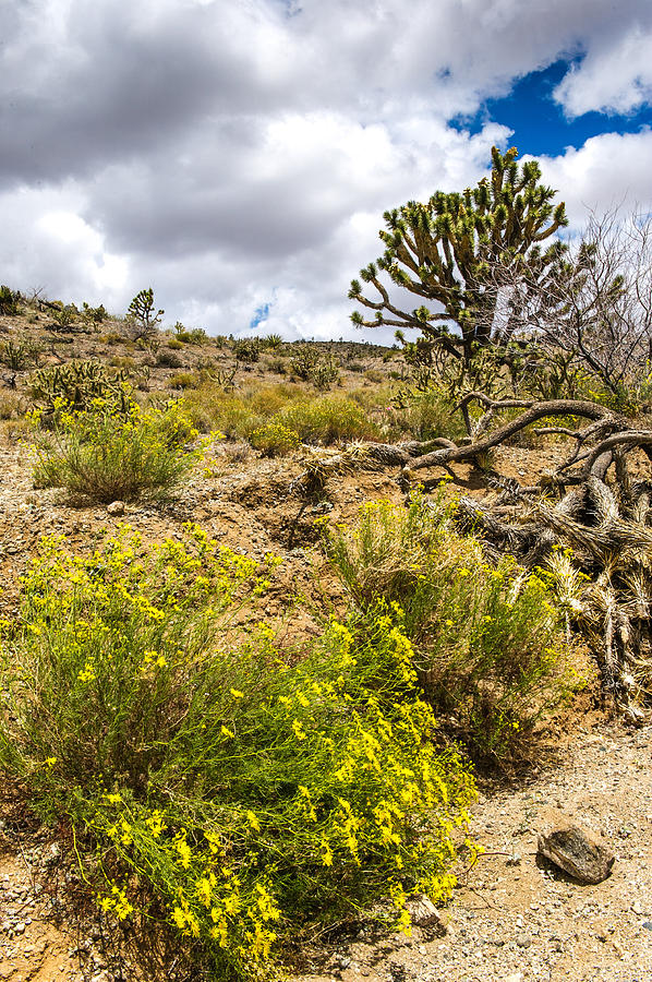 Joshua Photograph - Arizona Wildflowers And Joshua Trees by Willie Harper