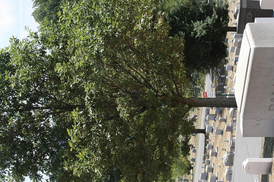 Arlington Photograph - Arlington National Cemetery - 121228 by DC Photographer