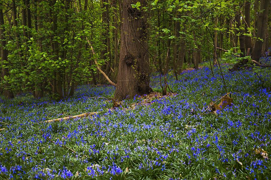 Beautiful Photograph - Around A Tree by Svetlana Sewell