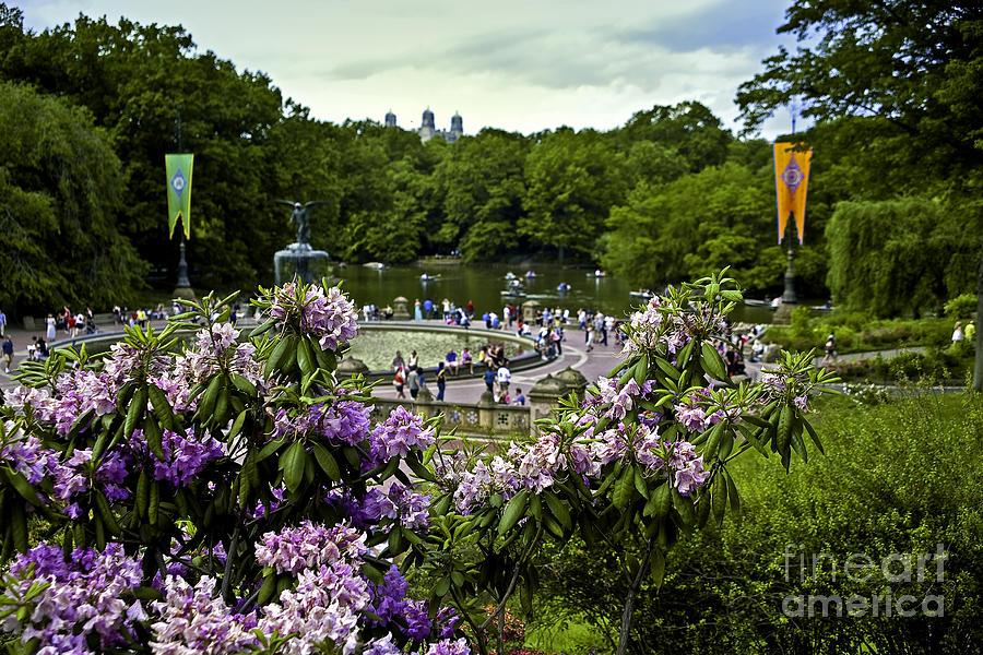 Central Park Photograph - Around Bethesda Fountain by Madeline Ellis
