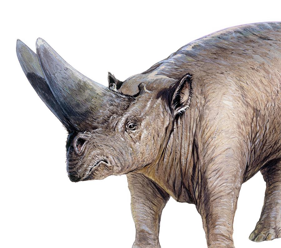 Arsinoitherium Photograph - Arsinoitherium by Michael Long/science Photo Library