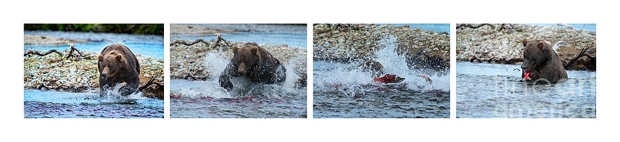 Grizzly Bear Photograph - Art Of Catching Salmon  by Dan Friend
