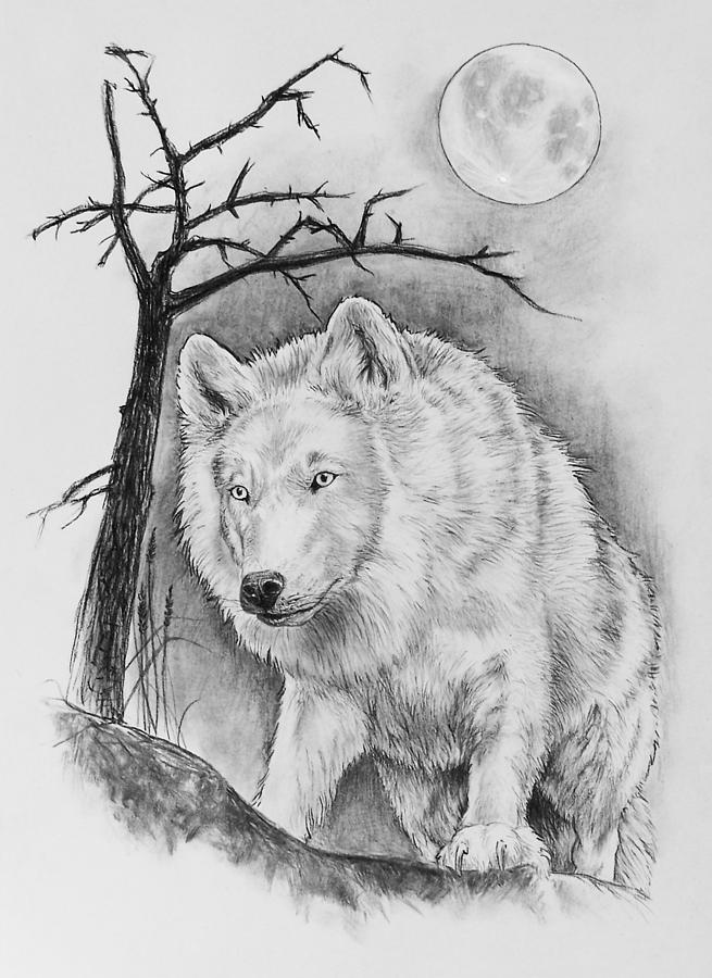 artic wolf drawing by bernadett kovacs