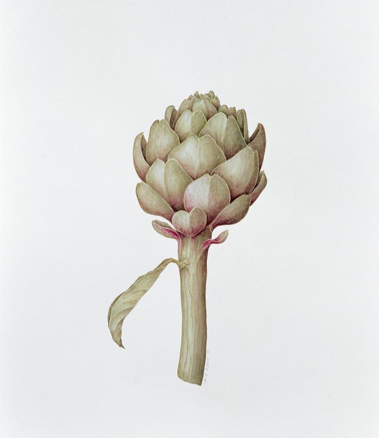 Nice Painting - Artichoke by Diana Everett