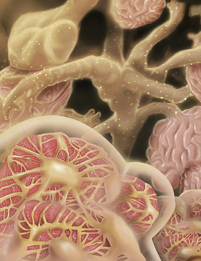 Artist Depcition Of Glomerulus Digital Art by Alan Gesek/stocktrek Images