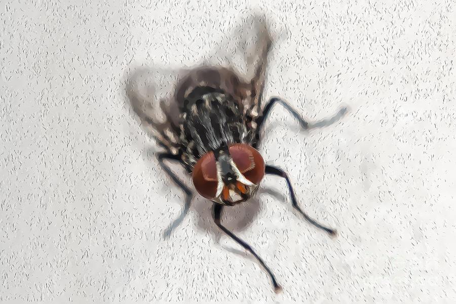 Fly Photograph - Oil Fly by Raul Davila