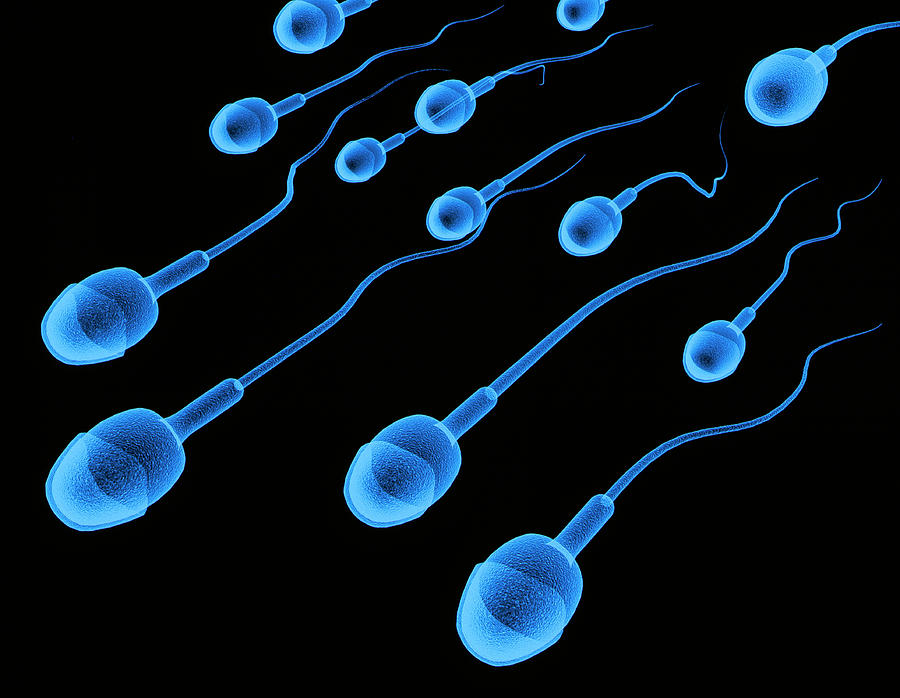 Sperm Photograph - Artwork Of Sperm by Alfred Pasieka/science Photo Library