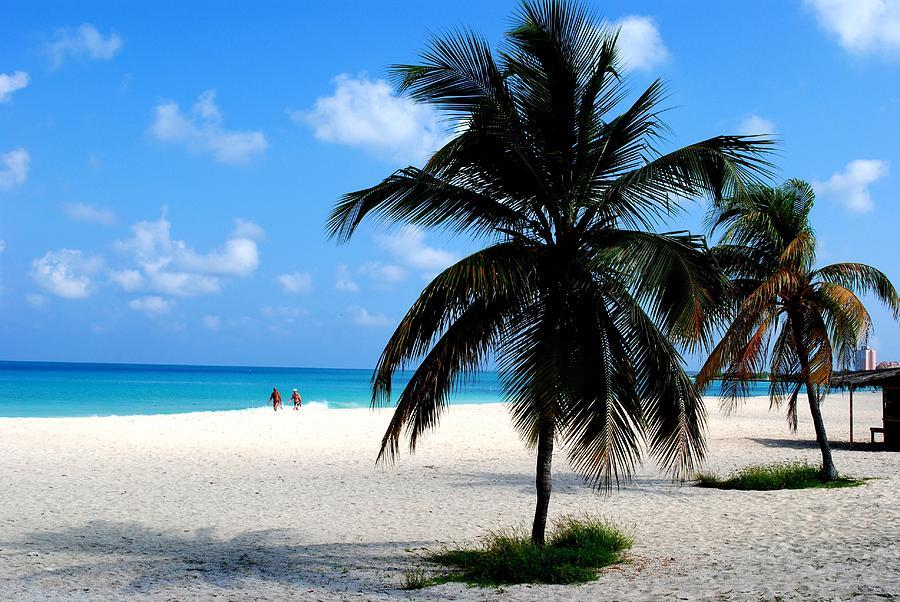 Palm Trees Photograph - Aruba Paradise Beach by Ron Bartels