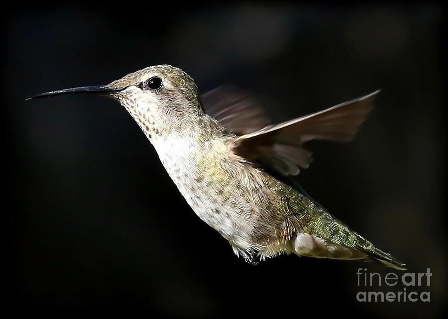 As Free As A Hummingbird Photograph