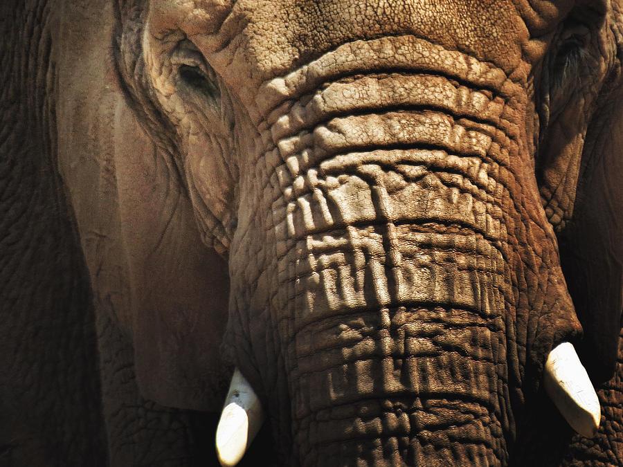 Summer Photograph - As High As An Elephants Eye by Susan Desmore