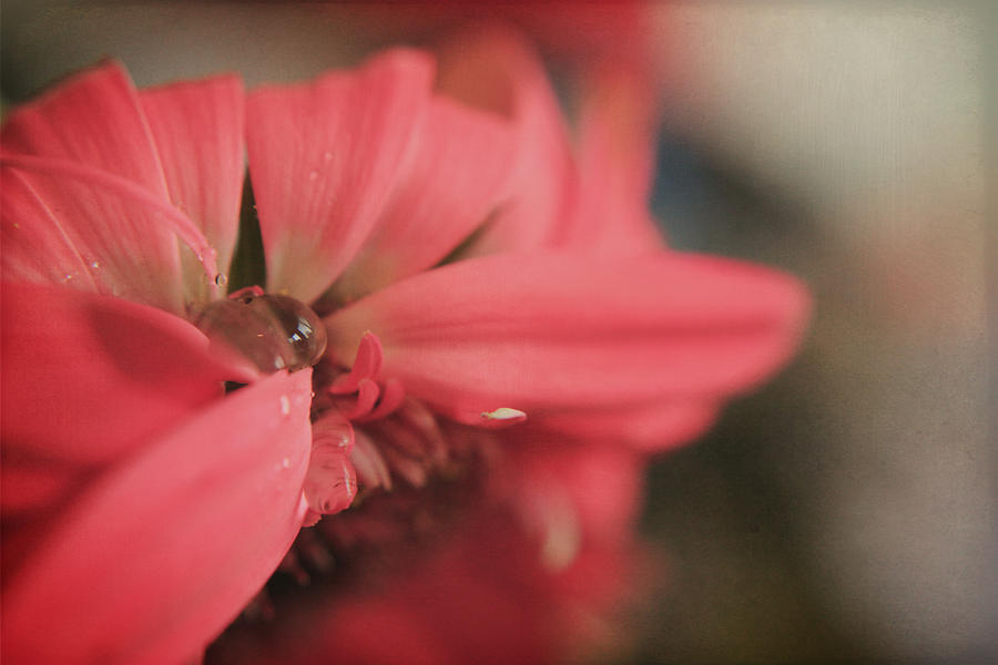 Flowers Photograph - As I Sit By The Window by Laurie Search