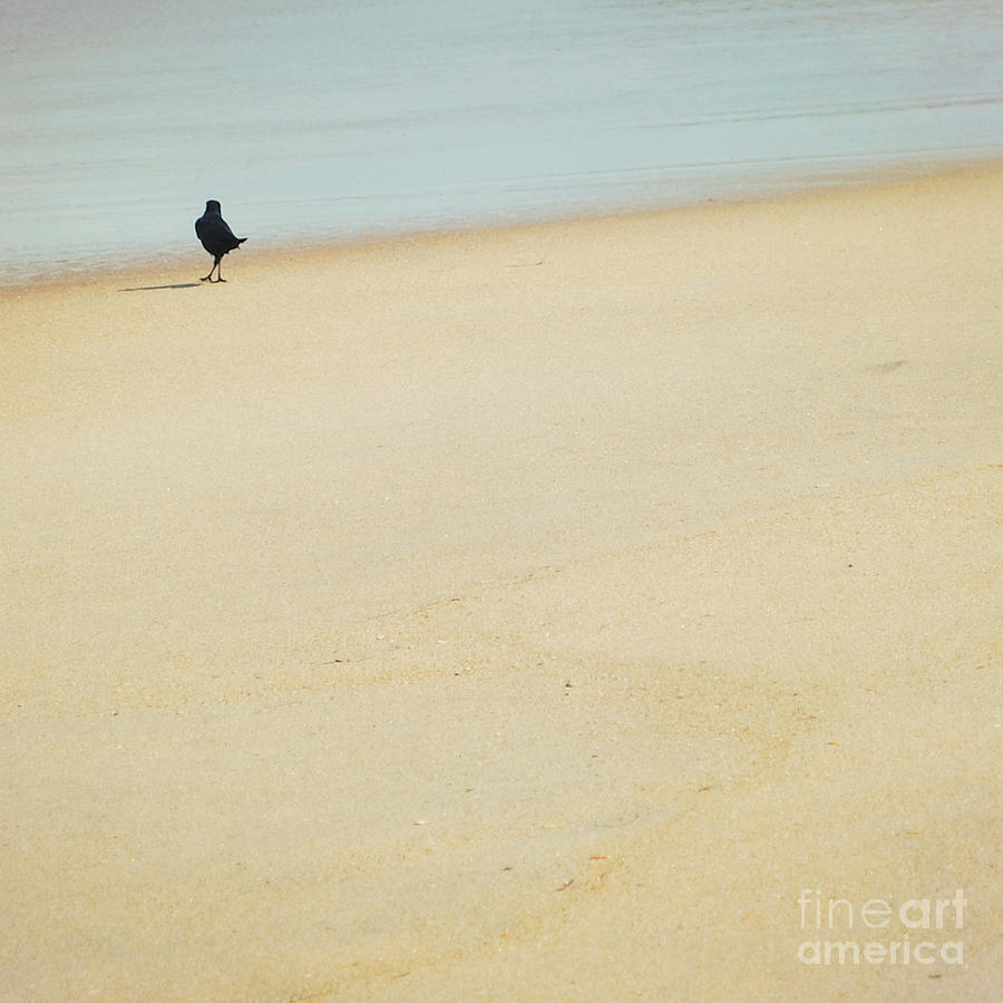 Crow Photograph - As I Wander by Sharon Kalstek-Coty