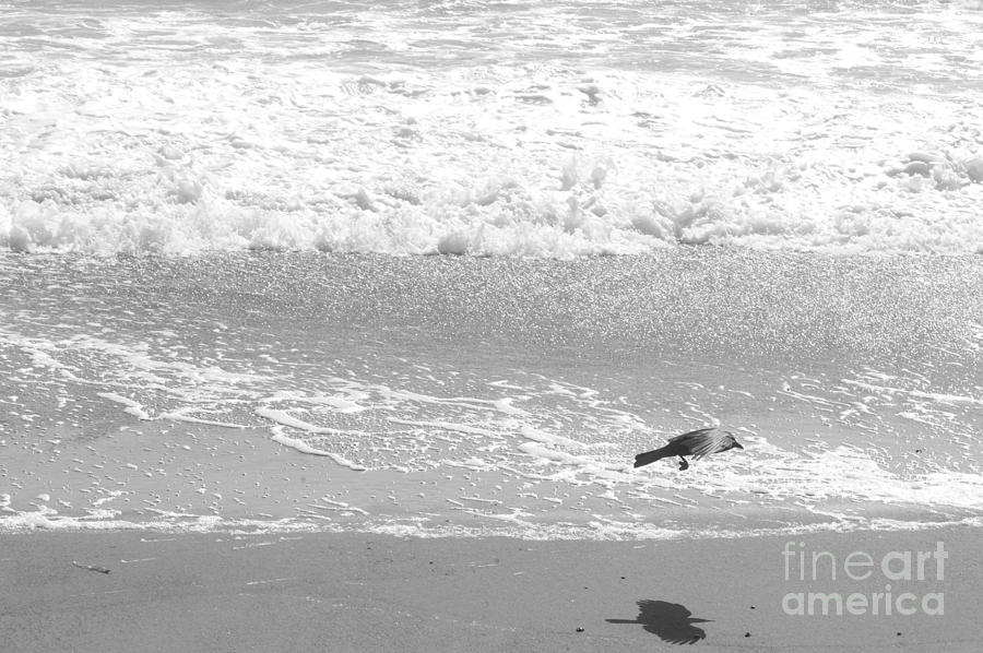 Beach Photograph - As  The Crow Flies by Artist and Photographer Laura Wrede