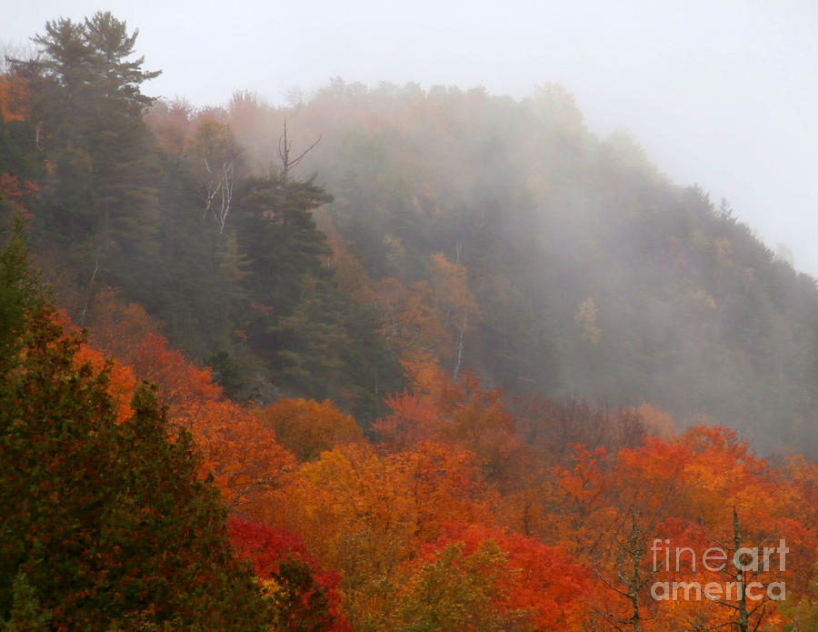 Foliage Photography Photograph - As The Fog Rolls In by Steven Valkenberg