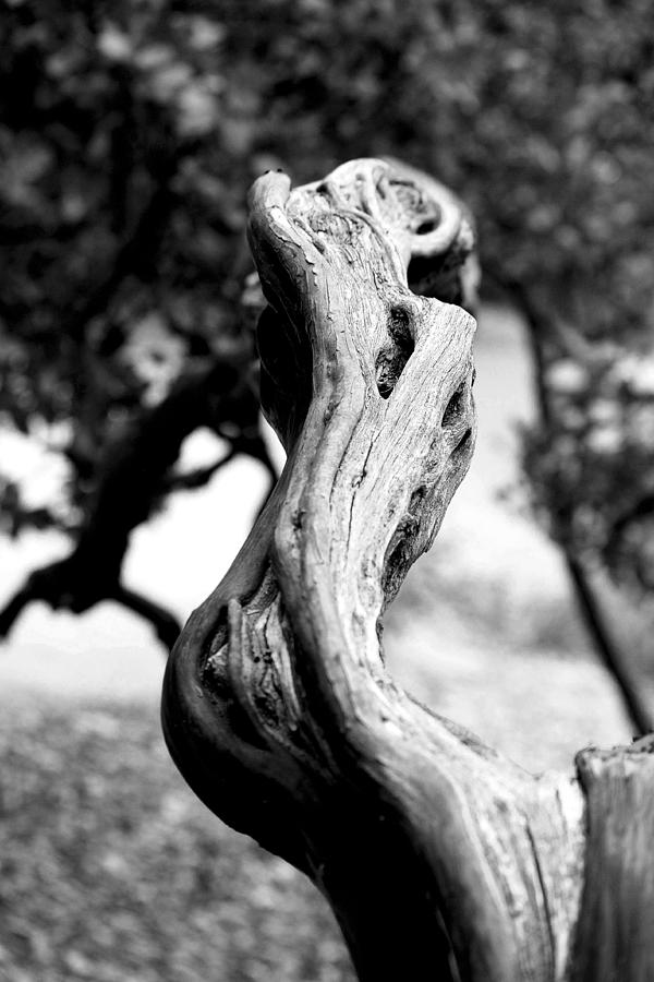 Tree Photograph - Ascending Branch by Luna Curran