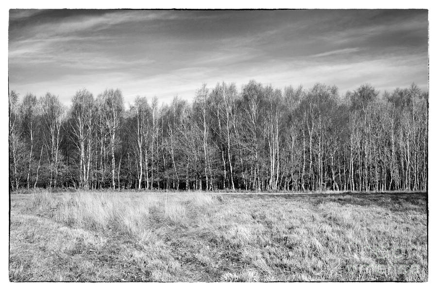 Ashdown Forest Photograph - Ashdown Forest Trees In A Row by Natalie Kinnear