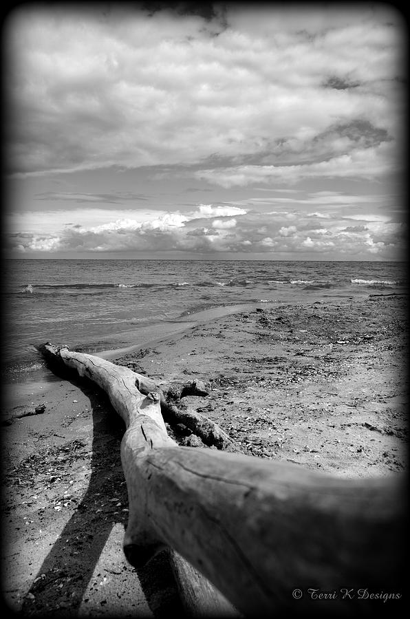 Log Photograph - Ashore by Terri K Designs