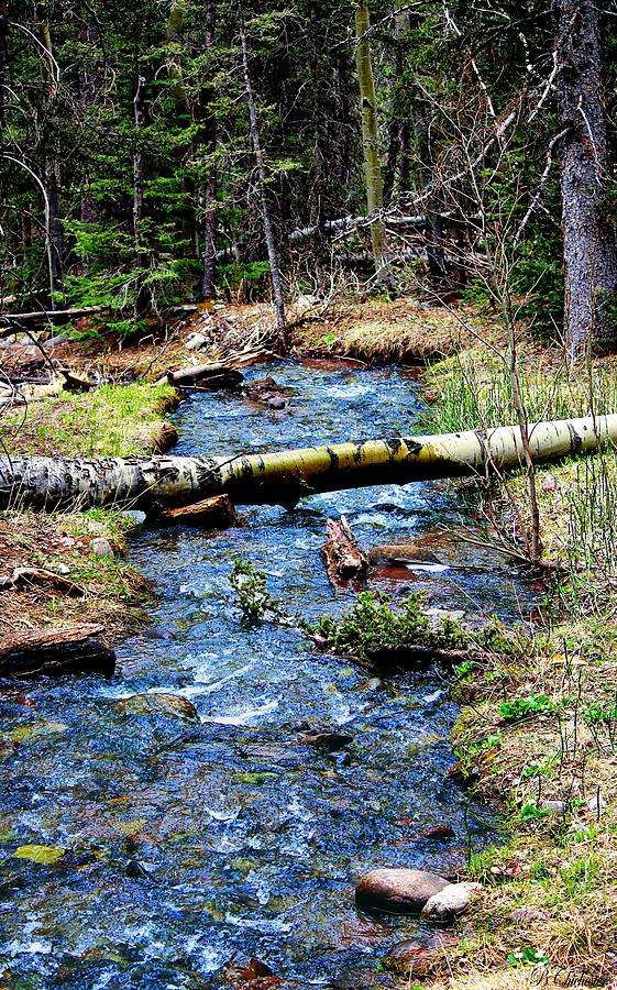 Colorado Landscape Photograph - Aspen Crossing Mountain Stream by Barbara Chichester