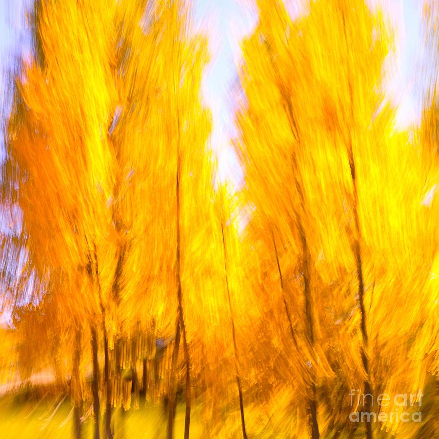 Aspen Photograph - Aspen Fire by Brian Brown