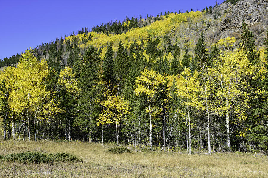 Landscape Photograph - Aspen Foliage by Tom Wilbert