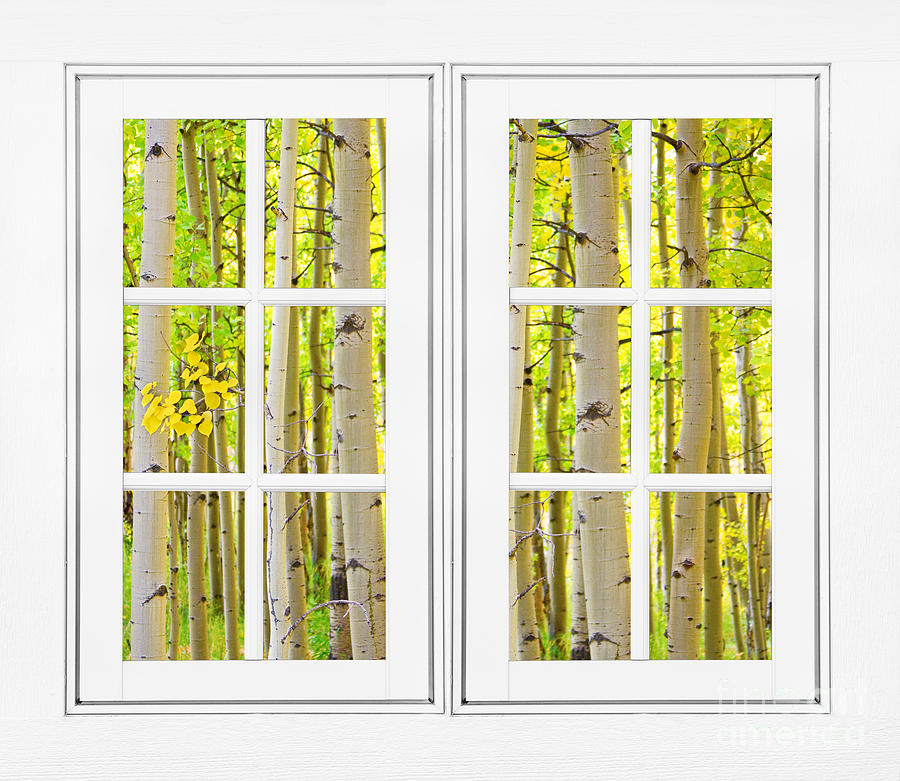 Aspen Forest White Picture Window Frame View Photograph by James BO ...