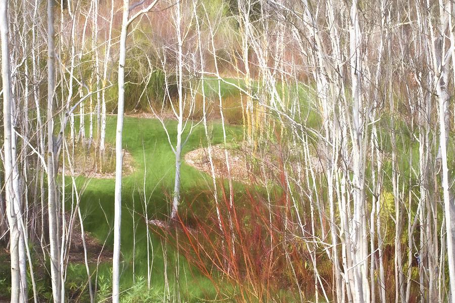 Aspen Grove - Green Grass by Saxon Holt