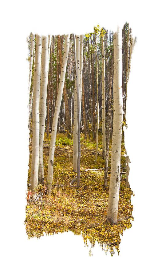 Aspen Leaf Path by Judy Deist