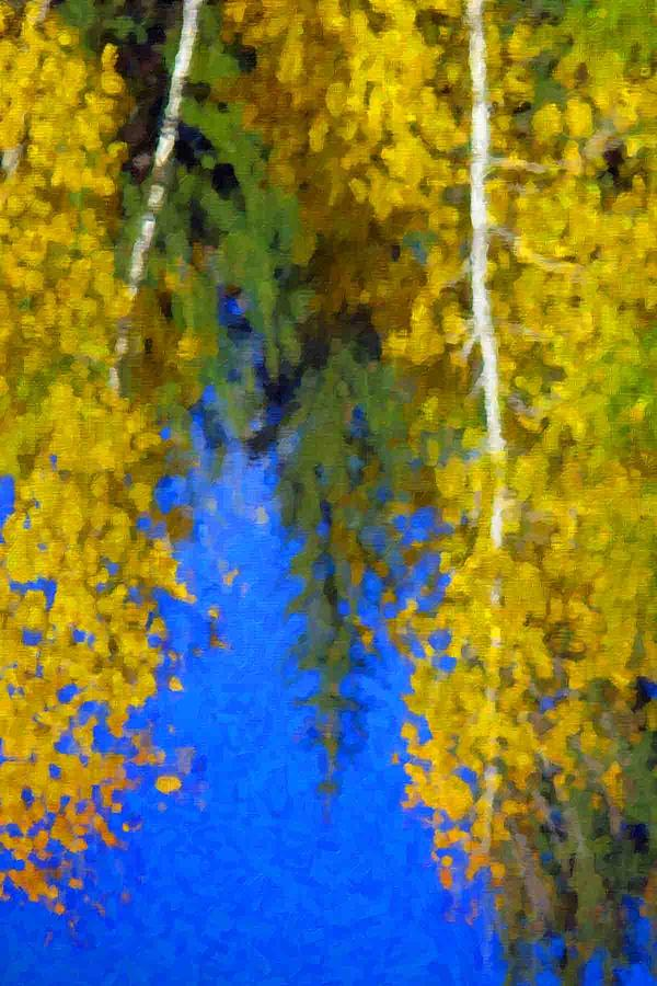 Aspen Reflection Photograph by Pat Now