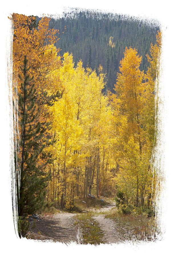Aspen Road by Judy Deist