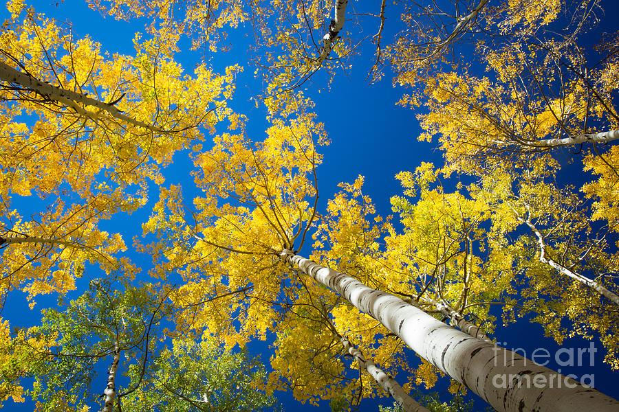 America Photograph - Aspen Sky by Inge Johnsson