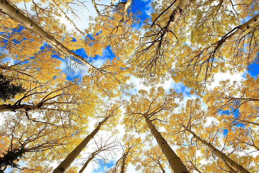 Colorado Photograph - Aspen Sky by Robert Yone