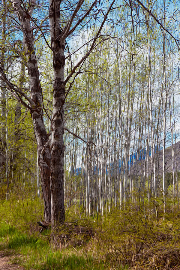 North Cascades Painting - Aspen Trees Proudly Standing by Omaste Witkowski