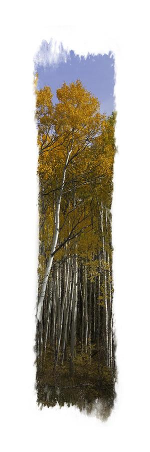 Aspen Vertical Panorama by Judy Deist