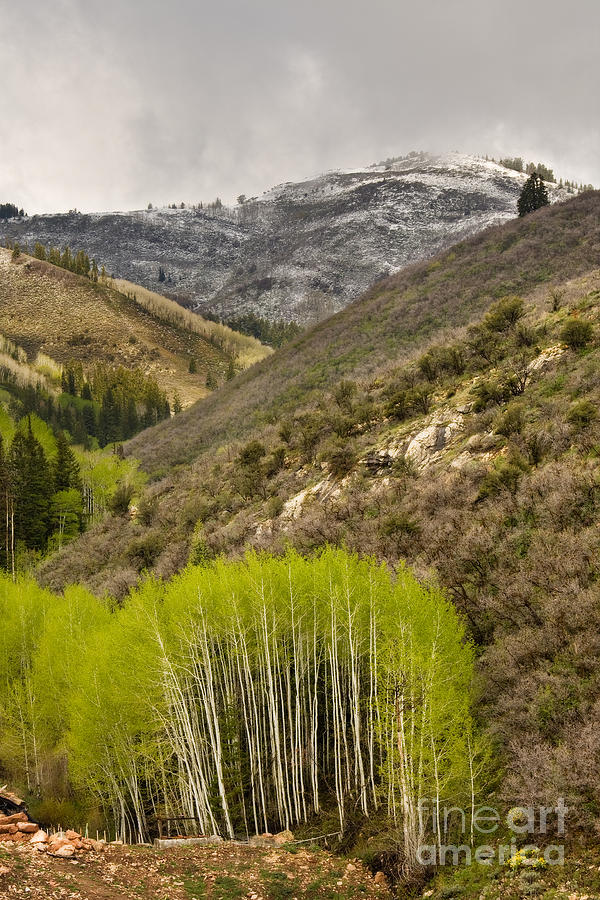 Rocky Mountains Photograph - Aspens In Early Summer Storm by Matt Tilghman
