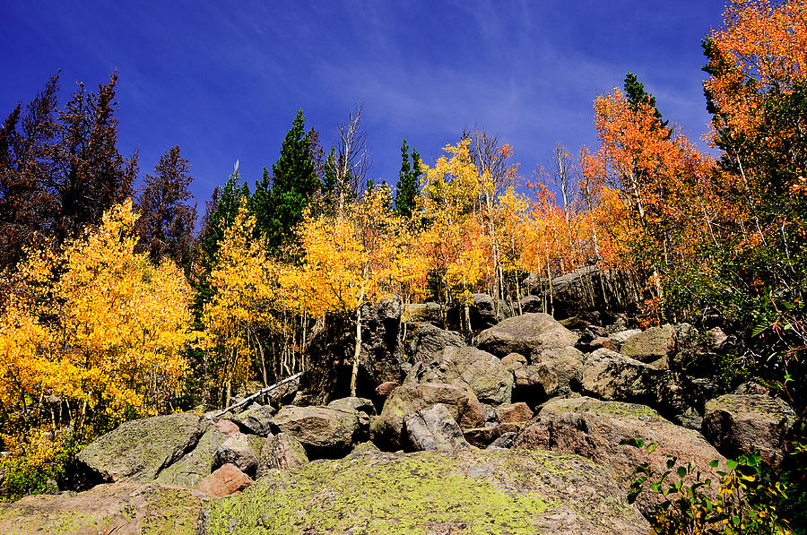 Aspen Photograph - Aspens in Fall by Don and Bonnie Fink