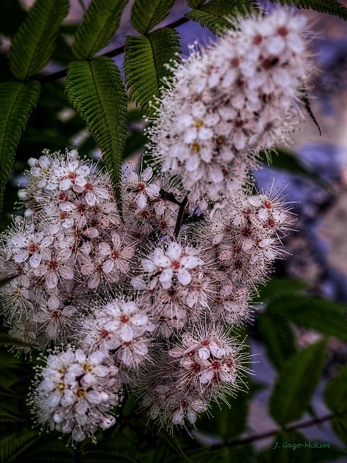 Plants Photograph - Aspire by Jo-Anne Gazo-McKim