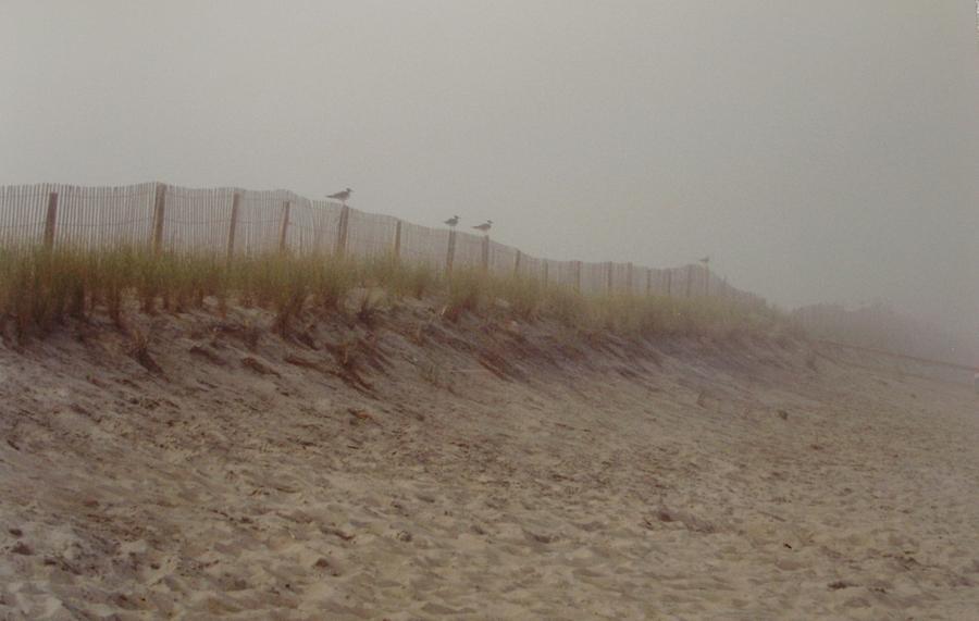 Dunes Photograph - Assateague Dunes by Joann Renner