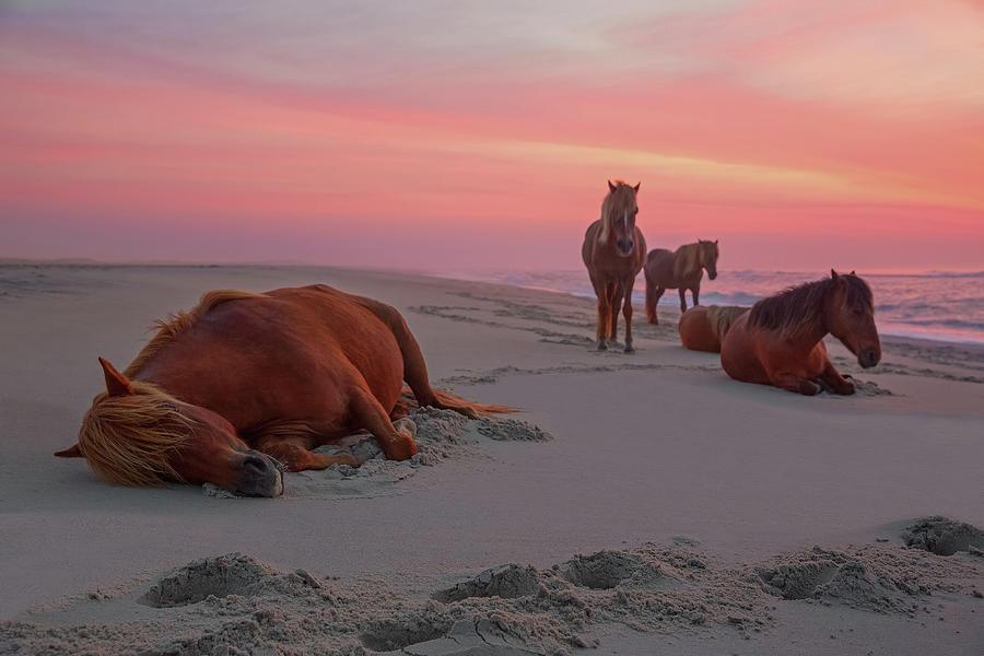 Assateague Island Wild Horses Photograph by Image By Michael Rickard