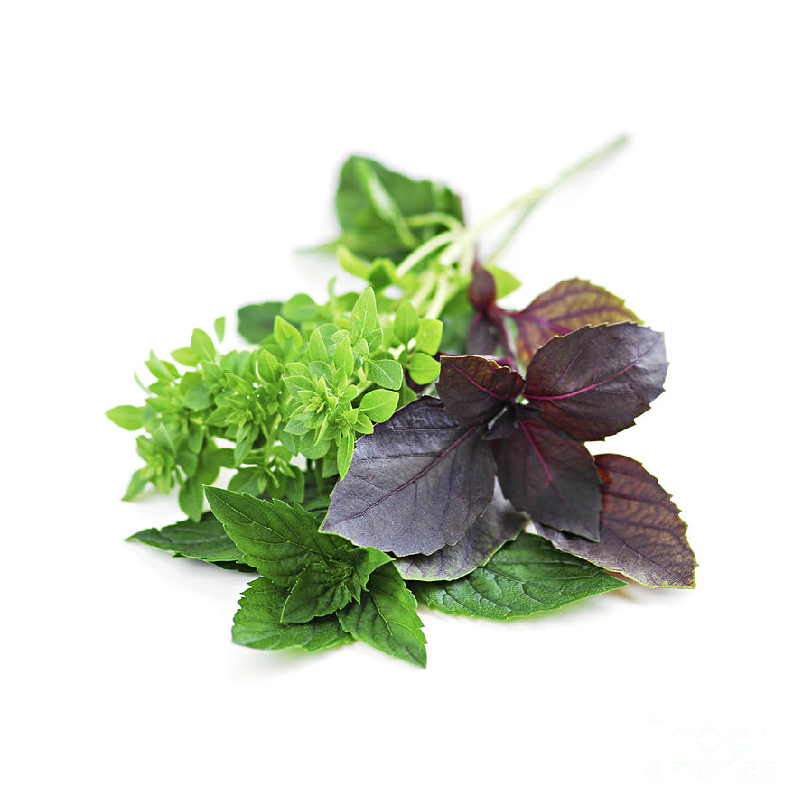 Herb Photograph - Assorted Basil Herbs by Elena Elisseeva