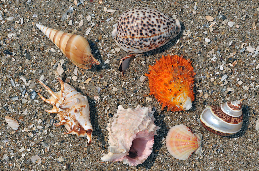 assorted seashells on the sand photograph by anton oparin