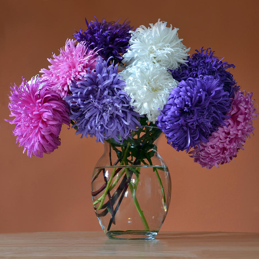 Asters Photograph - Astonishing Asters. by Terence Davis