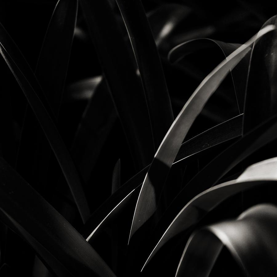 Asymmetry Photograph by John Magnet Bell