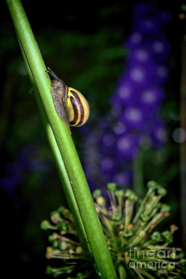 Snail Photograph - At A Snails Pace by Henry Kowalski