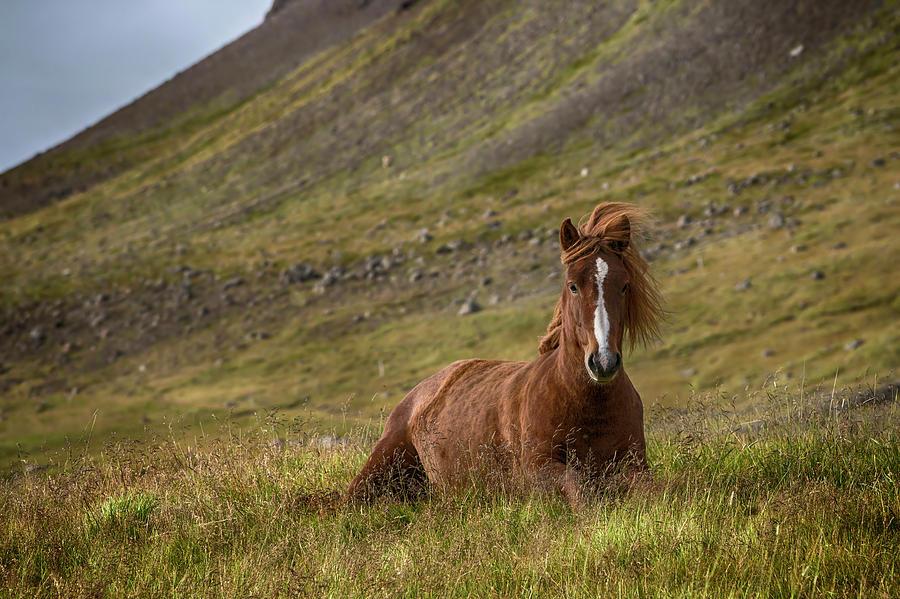 Iceland Photograph - At Home by Bragi Ingibergsson -