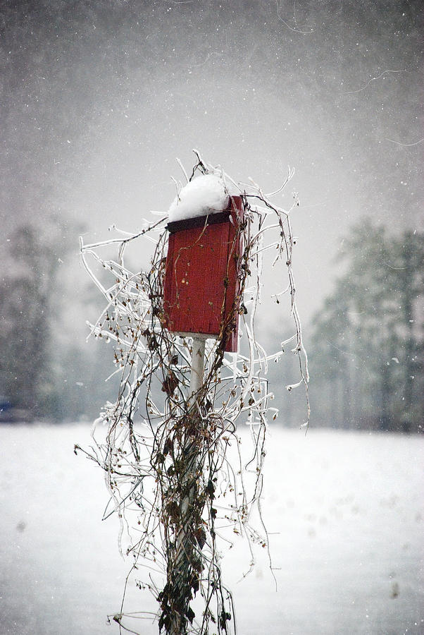 At Home In The Snow by Beverly Stapleton