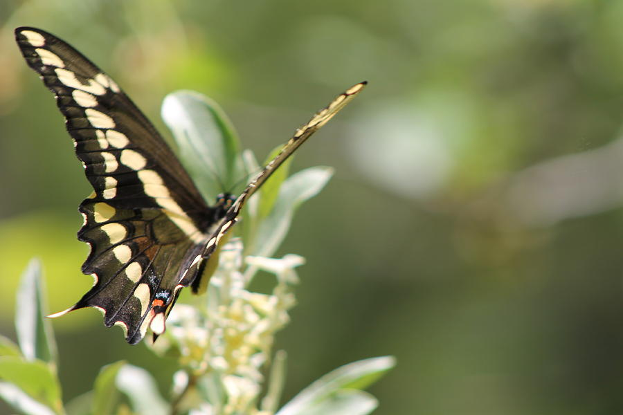 Nature Photograph - At Rest by Sarah Boyd