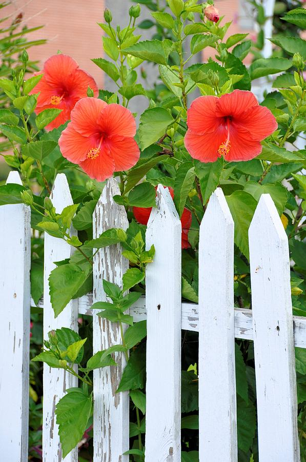 Floral Photograph - At The Back Gate by Jan Amiss Photography